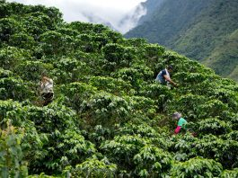 World Coffee Research: the future of coffee