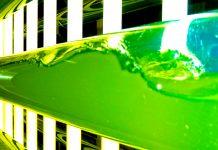 algae production in aquaculture