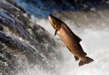 ras aquaculture