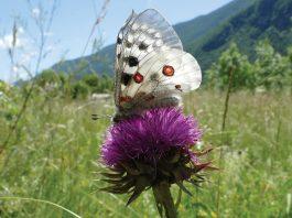 butterfly data