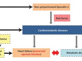 New targets and novel biomarkers in cardiometabolic diseases
