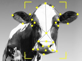 cattle facial recognition