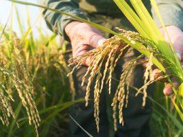 Grain measurement