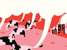 Organic compound reduces methane emissions of cattle by 25%