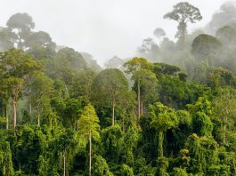Could financial incentives help preserve tropical forests?