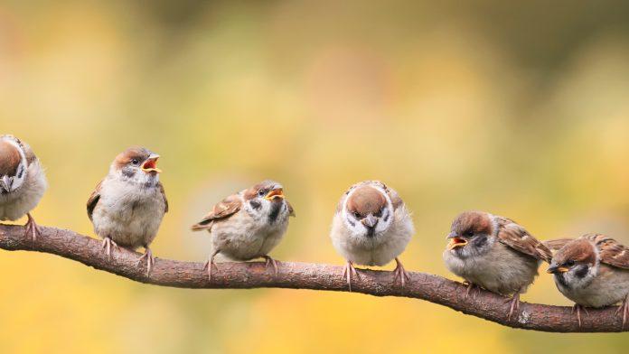 biodiversity in birds