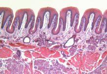 biomimetic tongue
