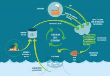 sustainable fish feed