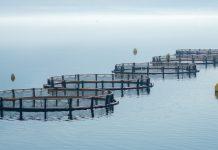 responsible aquaculture