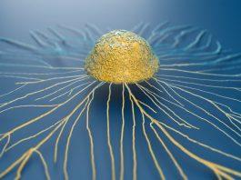 pathogenic T-cells