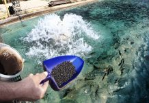Antimicrobial resistance in aquaculture