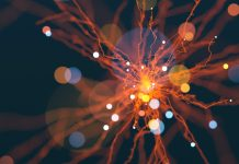 Heavy ion physics