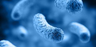 DNA-repair proteins