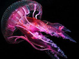 deep-sea species