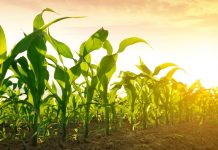 Protecting plant fertility from stress