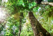The Amazon deforestation regrowth climate change