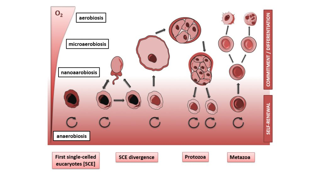 Stem cell engineering: learning from the evolution