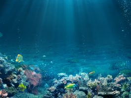 Fossil fuel emissions may be skewing data from marine ecosystems