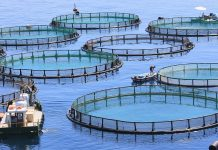 aquaculture waste