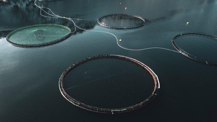 Optimeering Aqua: using digital tools to optimise aquaculture