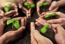 Multi-stakeholder agricultural co-operatives and sustainability