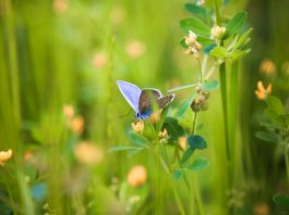 Preventing biodiversity loss microclimatic variability