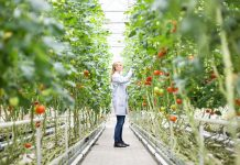 Using plant probes to enhance sustainable farming