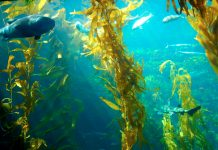 Farmed seafood is a climate smart form of agriculture