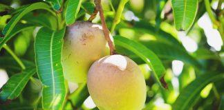 Enhancing food preservation with mango-based bioplastic