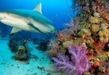shark denticles