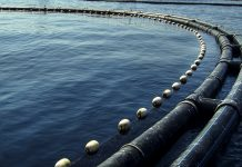 Revolutionising the aquaculture industry using soy-based feed