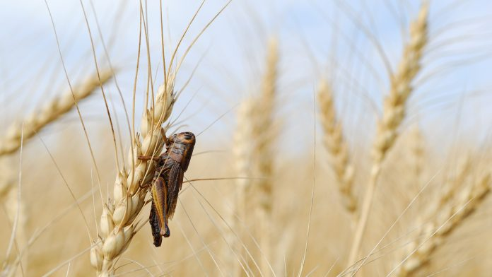 Protecting crops from insects with innovative compound solution