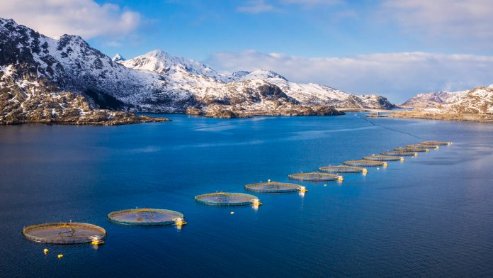 Innovation and sustainability efforts within Norwegian aquaculture